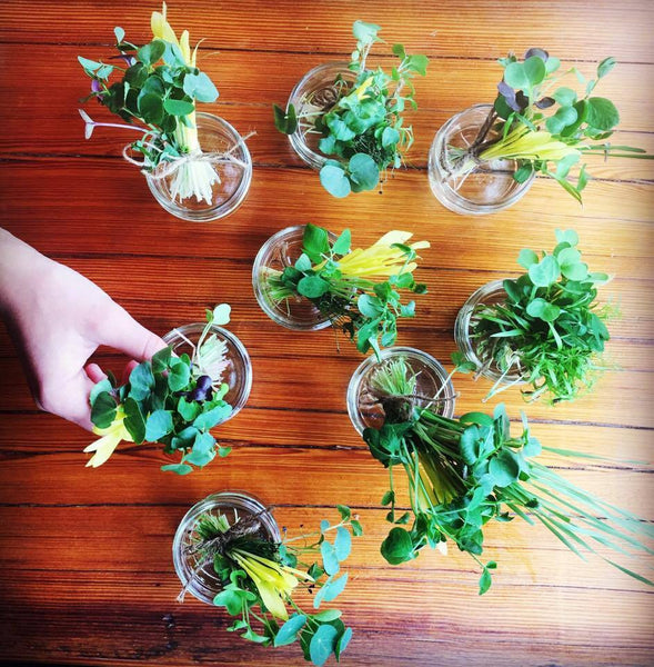 Mini Edible Microgreen Bouquets