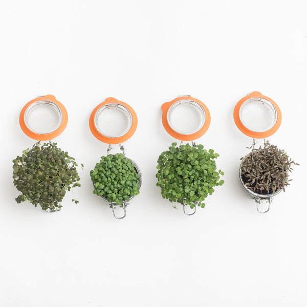 "2"" mason flip jar edible microgreen centerpieces in four varieties by Little Wild Things City Farm"