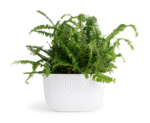 Woolly Pocket Living Wall Planter 2