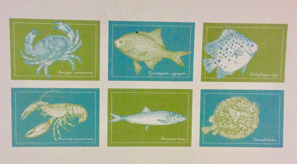 Placemats, Fish Of The Day