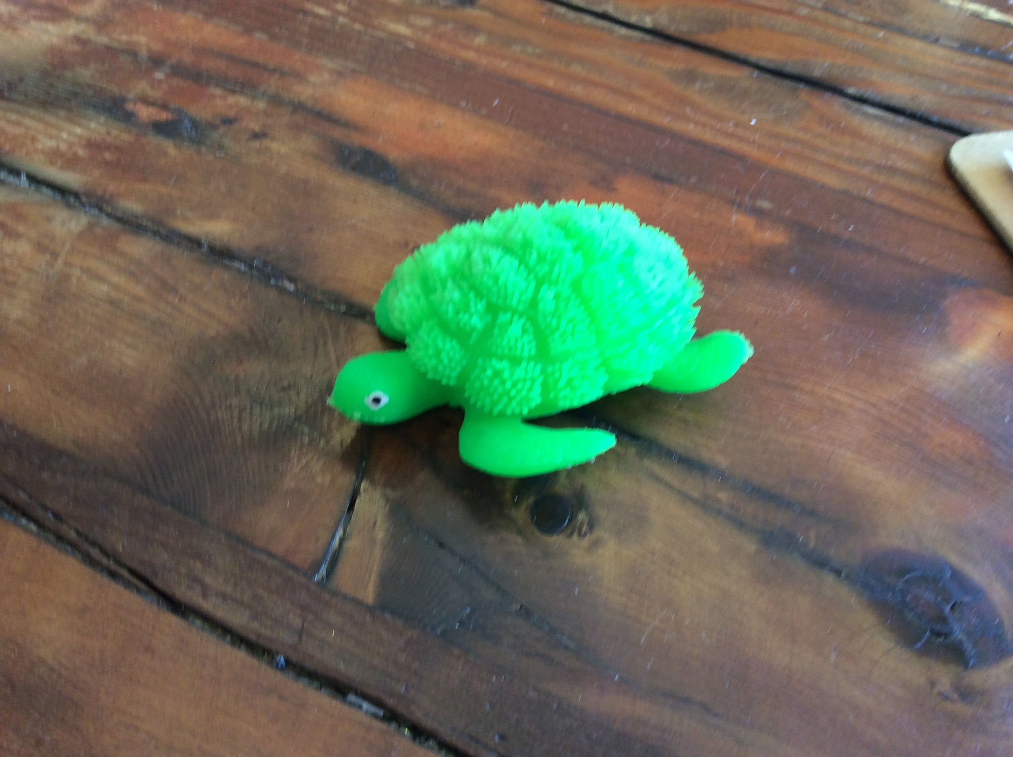Turtle, lights up - Annapolis Maritime Antiques