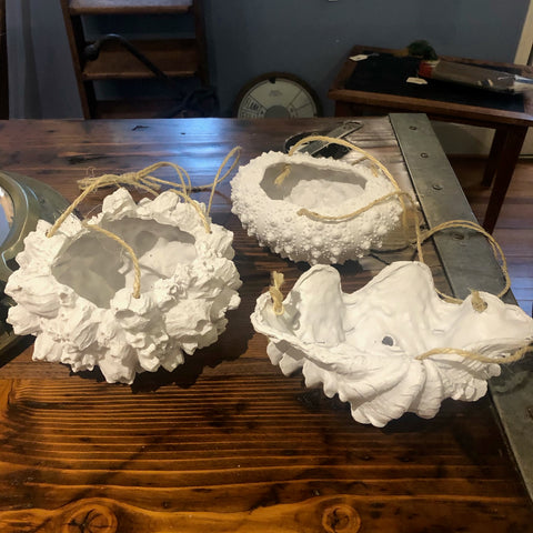 Hanging Plant Holder, Three Styles, Sea Urchin, Shell, and Barnacle - Annapolis Maritime Antiques