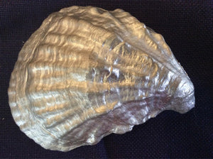 Pewter Large Oyster Shell