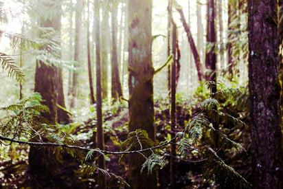 Managed Forestry Initiative | Sustainable Baby Products