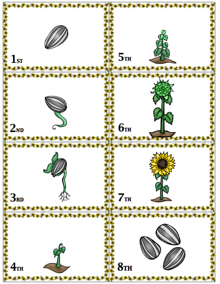 Sunflower Life Cycle Sequencing Card Game – Life Over C's
