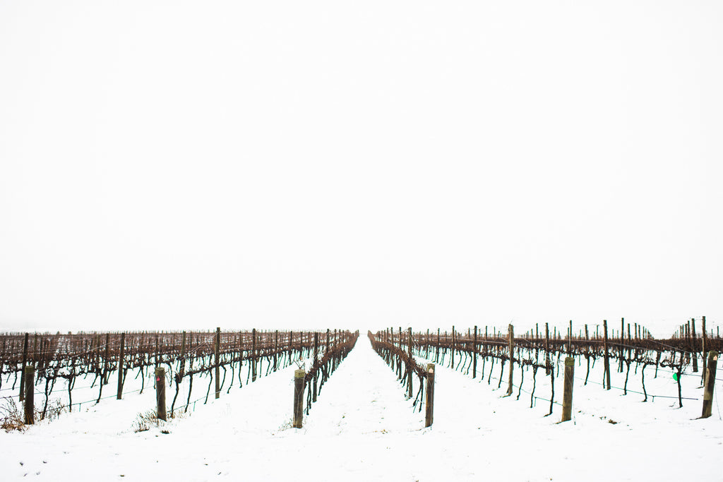 Snowfall on our Annangrove Vineyard