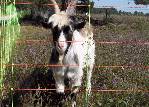 Goats – FenceFast Ltd