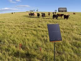 Gallagher Portable Solar Fence Energizer S200 Cattle