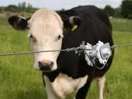 Gallagher Wire Strainer Cow