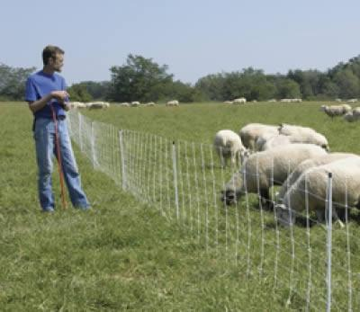 Installed sheep netting