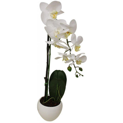 Orchid in White Pot with Saucer - 44 cm