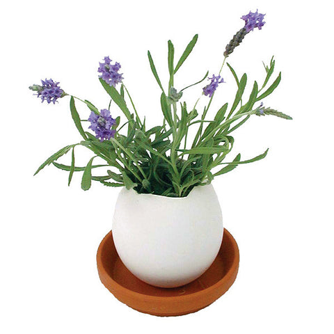 Lavender Eggling Mini-Garden - City Bird