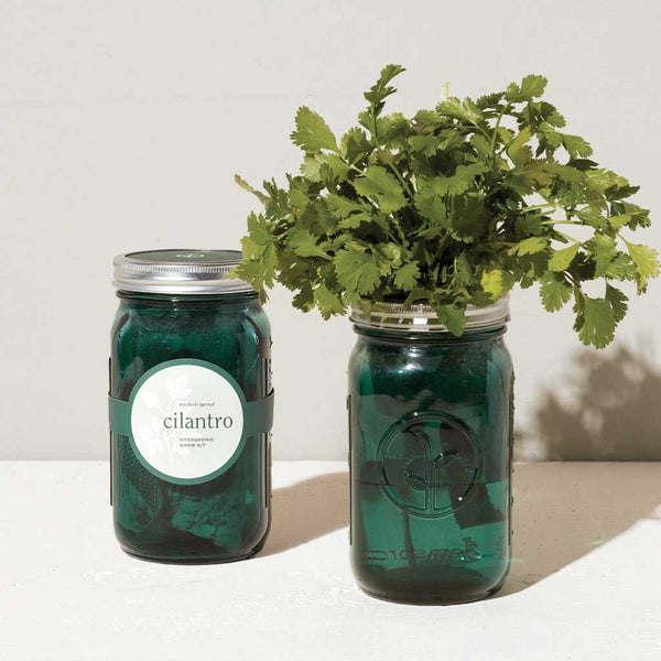 Cilantro Garden Jar Planter Kit - City Bird