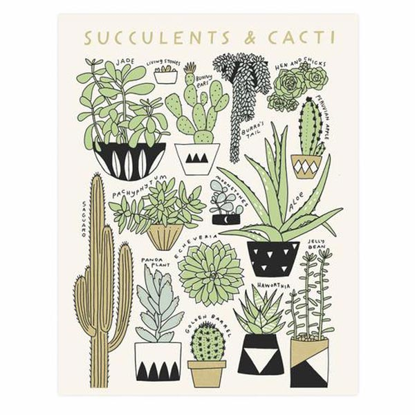 Succulents and Cacti 11x14 Print