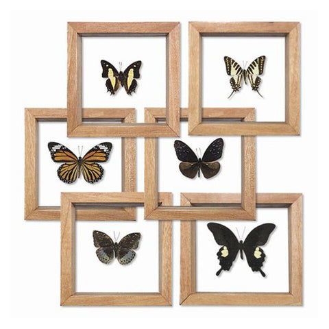 Single Framed Butterfly - City Bird