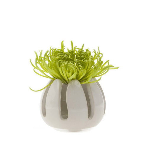 Gideon Porcelain Air Plant Holder - City Bird