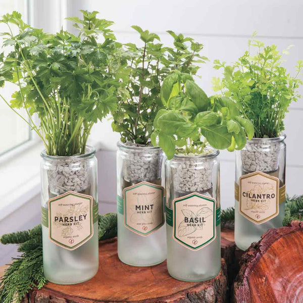 Mint Eco Planter Herb Kit