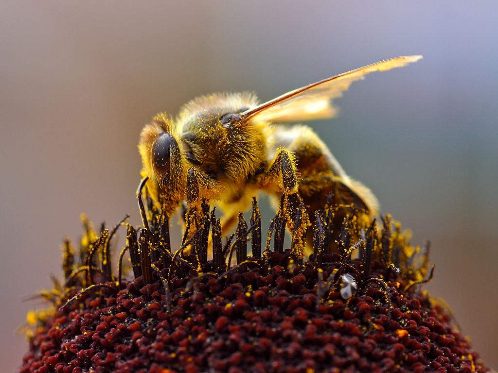 Our Pollinating Friends: Why We Need Bees
