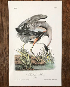 Audubon Print - Great Blue Heron