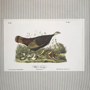 Audubon-Wild Turkey