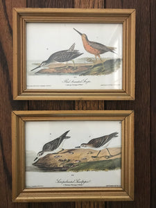Framed Audubon Prints
