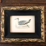 Framed Antique 1800s Engraving