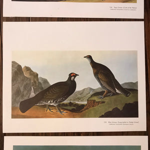 Collection of Six Audubon prints