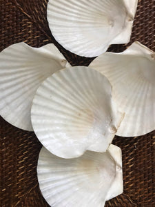 Coastal Chic Shell Servers