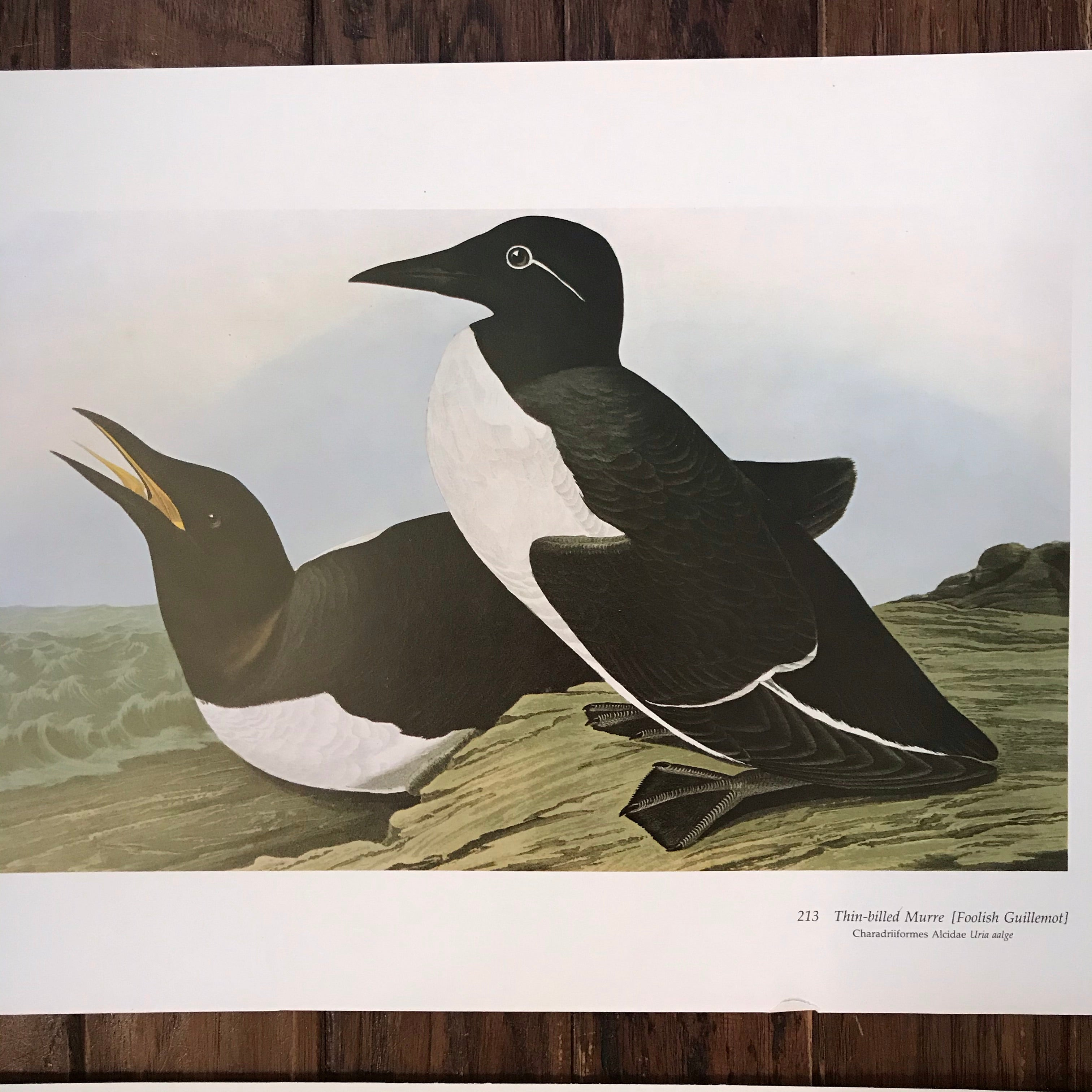 Pair of Audubon Prints