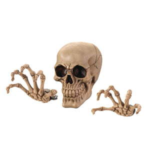 Dragon Crest Skeleton Wall Decor Set - 10017295