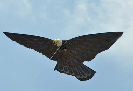 Bald Eagle Kite with 6 Ft Wingspan - Bali Thai Imports