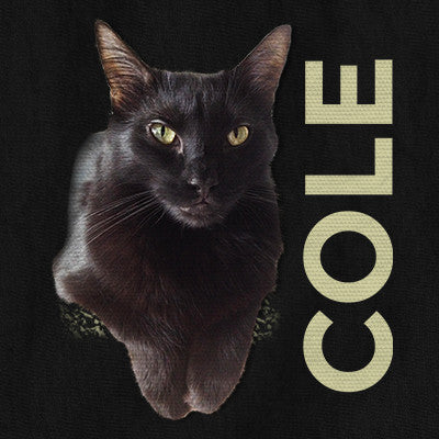 Cole the Black Cat