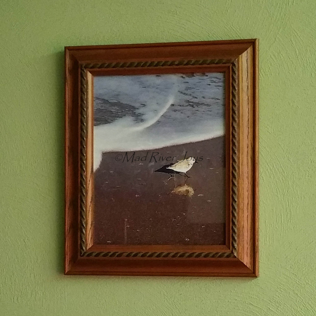 "Photo Print--Framed--8"" x 10""--Sandpiper Reflections"