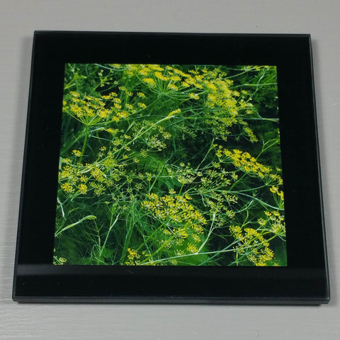 Coasters--Photo Print--Glass--Fennel Flowers