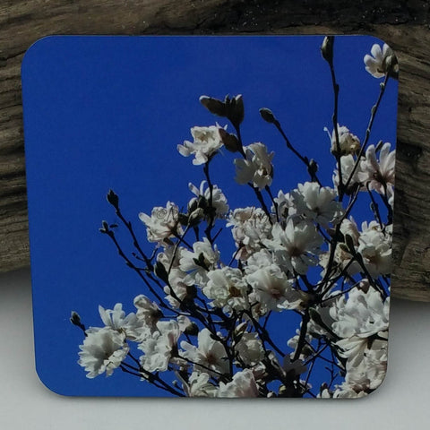 Coaster--Photo Print--Cork--Star Magnolia
