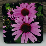 Coaster--Photo Print--Cork--Purple Coneflower