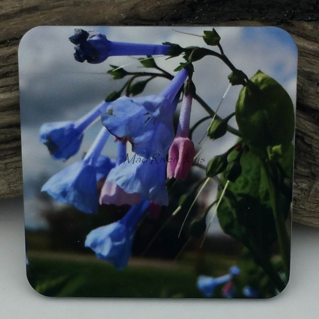 Coaster--Photo Print--Cork--Virginia Bluebells