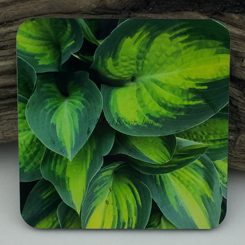 Coaster--Photo Print--Cork--Hosta