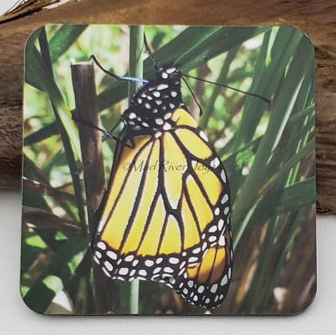 Coaster--Photo Print--Cork--Monarch Butterfly