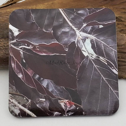 Coaster--Photo Print--Cork--Purple Weeping Beech