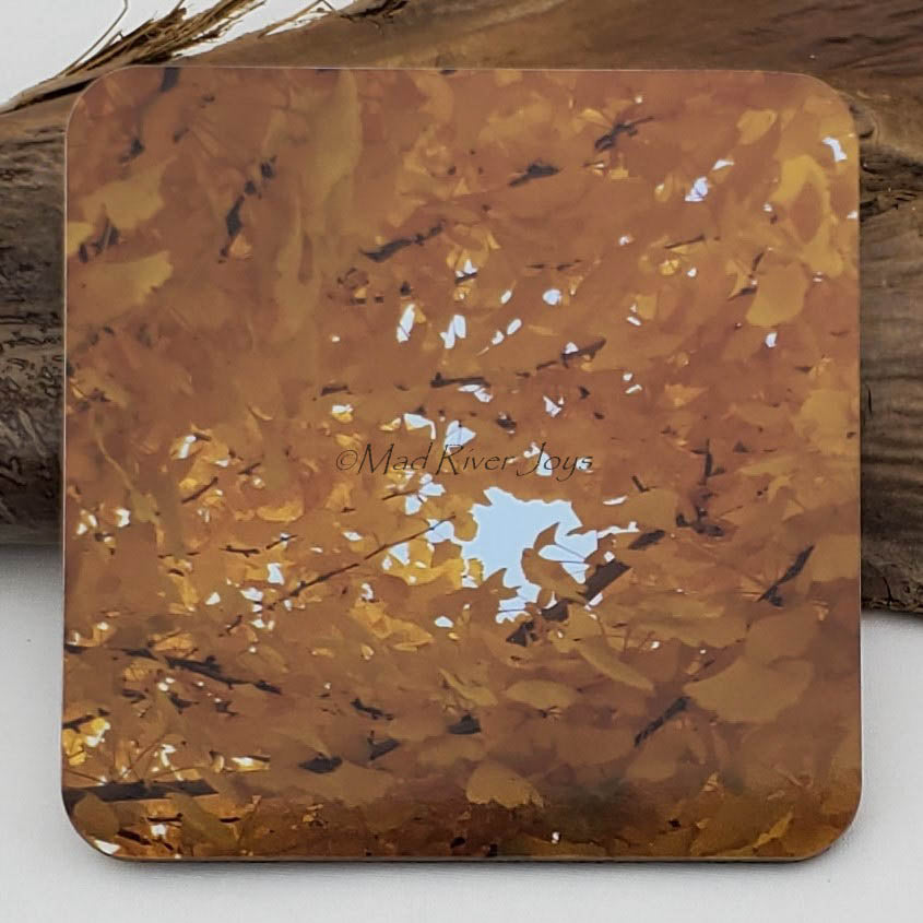 Coaster--Photo Print--Cork--Ginkgo Gold