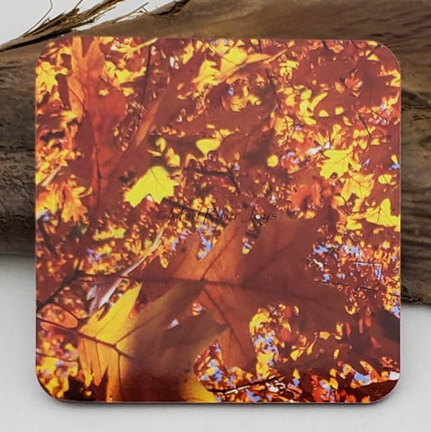 Coaster--Photo Print--Cork--Oak Lights