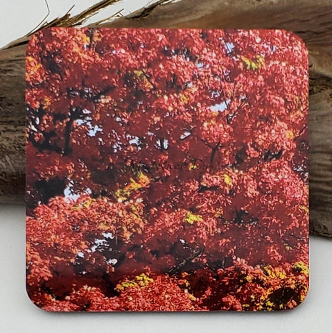 Coaster--Photo Print--Cork--Sugar Maple Color