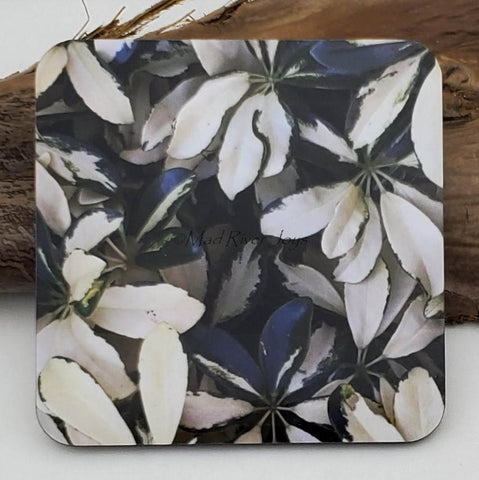 Coaster--Photo Print--Cork--Variegated Umbrella Tree
