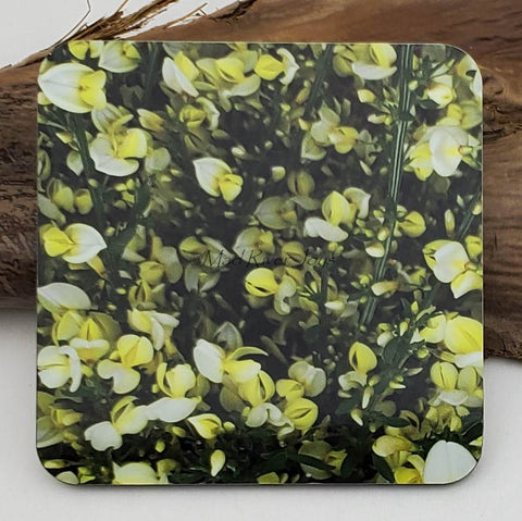 Coaster--Photo Print--Cork--Scotch Broom