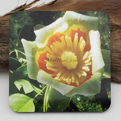 Coaster--Photo Print--Cork--Tulip Tree Flower