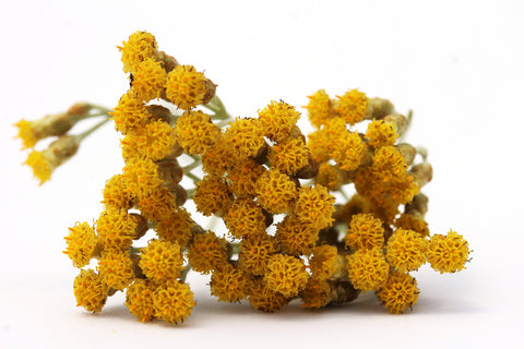 Helichrysum - By Faith Essential Oils