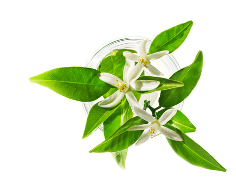 Neroli (Orange Blossom) - By Faith Essential Oils