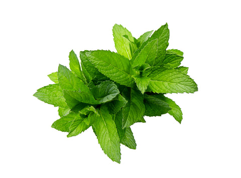 Peppermint - By Faith Essential Oils