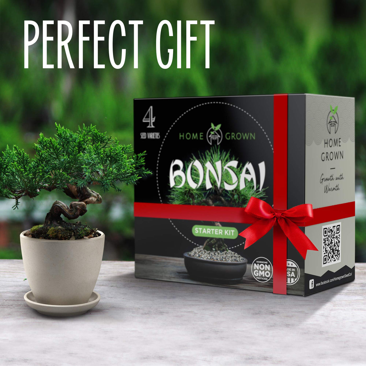 Home Grown Bonsai Tree Kit Bonsai Tree Starter Kit With 4 Seeds Types Incl Purple Bonsai Tree Indoor Growing Plant Gifts For Moms Who Have Everything Seed Starter Kit For Kids Diy